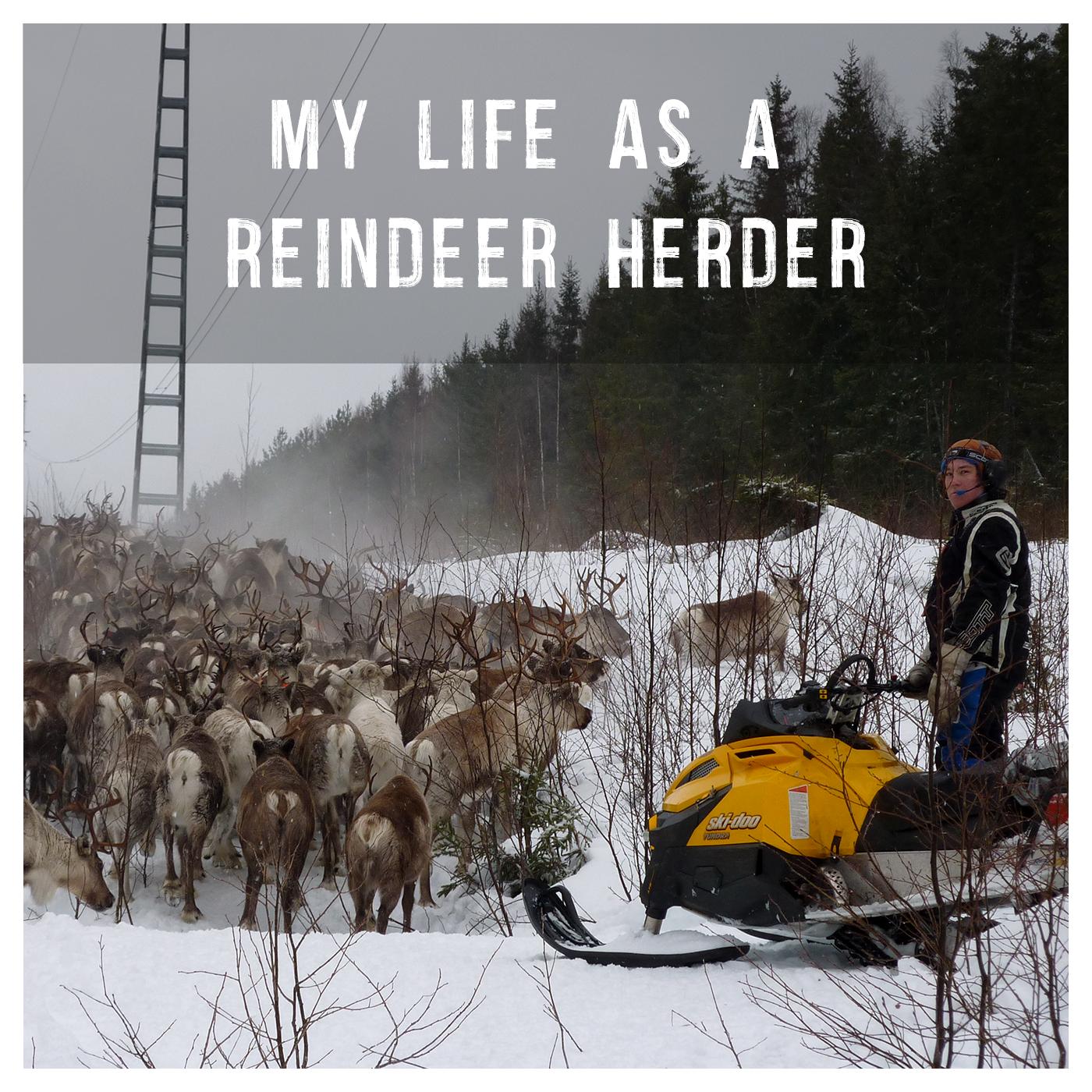 My life as a reindeer herder